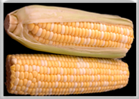 Learn about corn allergy symptoms and foods to avoid