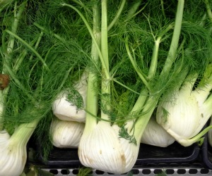Remedies for colic - fennel