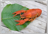 Find out about seafood allergy: fish and shellfish